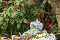 Υπόβαθρο λουλουδιών σε ένα τροπικό νησί του Μπαλί, Ινδονησία Πολύ όμορφο υπόβαθρο λουλουδιών στον ήλιο Κλείστε επάνω τη μακροεντο Στοκ Φωτογραφίες