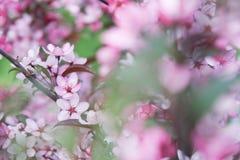 Υπόβαθρο λουλουδιών της Apple Στοκ φωτογραφία με δικαίωμα ελεύθερης χρήσης