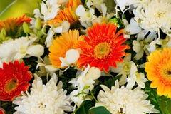 Υπόβαθρο λουλουδιών χρυσάνθεμων ανθοδεσμών Στοκ φωτογραφία με δικαίωμα ελεύθερης χρήσης