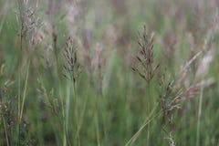 Υπόβαθρο λουλουδιών χλόης Στοκ Εικόνα