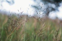 Υπόβαθρο λουλουδιών χλόης Στοκ Φωτογραφίες