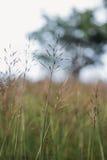 Υπόβαθρο λουλουδιών χλόης Στοκ Εικόνες