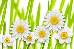 Υπόβαθρο λουλουδιών, Στοκ φωτογραφίες με δικαίωμα ελεύθερης χρήσης