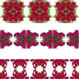 Υπόβαθρο λουλουδιών Dianthus διανυσματική απεικόνιση