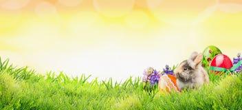 Υπόβαθρο Πάσχας με το λαγουδάκι, τα αυγά και τα λουλούδια στη χλόη και ηλιόλουστος ουρανός με το bokeh, έμβλημα Στοκ Εικόνες