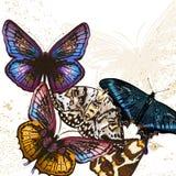 Υπόβαθρο πεταλούδων μόδας Στοκ φωτογραφία με δικαίωμα ελεύθερης χρήσης