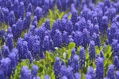 Υπόβαθρο πολλών πορφυρών λουλουδιών Στοκ φωτογραφία με δικαίωμα ελεύθερης χρήσης