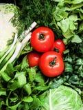 Υπόβαθρο πολλών φρέσκων πράσινων διαφορετικών λαχανικών, χορτάρια α Στοκ Εικόνες
