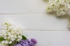 Υπόβαθρο, πλαίσιο με τους κλάδους της πασχαλιάς στα διαφορετικά χρώματα - λευκό, της πασχαλιάς και της πορφύρας Στοκ εικόνα με δικαίωμα ελεύθερης χρήσης