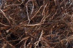 Υπόβαθρο ριζών δέντρων Στοκ Φωτογραφία