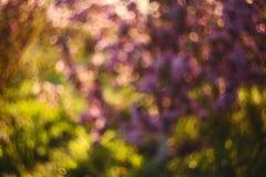 Υπόβαθρο ρόδινος-πρασίνου θαμπάδων Στοκ Εικόνες