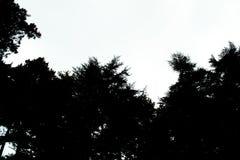 Υπόβαθρο σκιαγραφιών δέντρων Σκιαγραφία των δασικών σκιαγραφιών δέντρων μαύρων πευκών δέντρων πεύκων για το σχέδιο Στοκ εικόνα με δικαίωμα ελεύθερης χρήσης