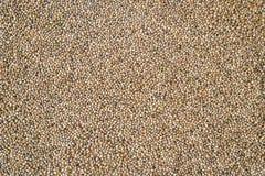 Υπόβαθρο σπόρων κάνναβης στη μακροεντολή Τοπ όψη Πολλοί σπόροι καννάβεων Μακρο λεπτομέρεια του σπόρου μαριχουάνα Οργανικός σπόρος στοκ εικόνα με δικαίωμα ελεύθερης χρήσης