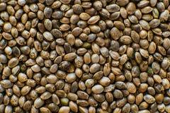 Υπόβαθρο σπόρων κάνναβης στη μακροεντολή Τοπ όψη Πολλοί σπόροι καννάβεων Μακρο λεπτομέρεια του σπόρου μαριχουάνα Οργανικός σπόρος στοκ εικόνες
