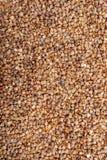 Υπόβαθρο σπόρων φαγόπυρου Στοκ Εικόνες