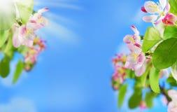 Υπόβαθρο συνόρων άνοιξη με τα ανθίζοντας λουλούδια στον κλάδο δέντρων Στοκ εικόνες με δικαίωμα ελεύθερης χρήσης