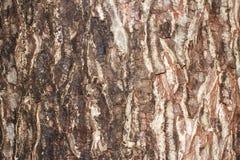 Υπόβαθρο σχεδίων φλοιών δέντρων Στοκ φωτογραφία με δικαίωμα ελεύθερης χρήσης