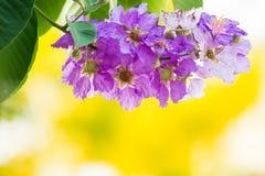 Υπόβαθρο σύστασης λουλουδιών Στοκ Εικόνες