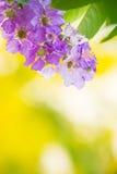Υπόβαθρο σύστασης λουλουδιών Στοκ Εικόνα