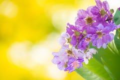 Υπόβαθρο σύστασης λουλουδιών Στοκ εικόνα με δικαίωμα ελεύθερης χρήσης