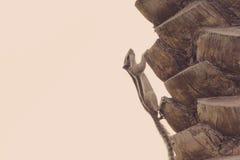 Υπόβαθρο σύστασης φλοιών φοινίκων Φυσικό πρότυπο Στοκ Εικόνες