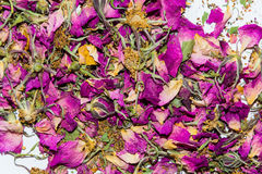 Υπόβαθρο, σύσταση των ξηρών rosehip λουλουδιών Στοκ φωτογραφία με δικαίωμα ελεύθερης χρήσης