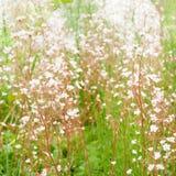 Υπόβαθρο τέχνης με τα λουλούδια Στοκ φωτογραφίες με δικαίωμα ελεύθερης χρήσης
