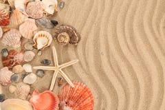 Υπόβαθρο της άμμου, των κοχυλιών και της έναρξης θάλασσας Στοκ Εικόνα