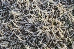 Υπόβαθρο της παγωμένης χλόης η καλυμμένη χλόη παγετού hoar βγάζει φύλλα τη μέντα Στοκ Φωτογραφίες