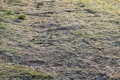 Υπόβαθρο της παγωμένης χλόης η καλυμμένη χλόη παγετού hoar βγάζει φύλλα τη μέντα Στοκ εικόνα με δικαίωμα ελεύθερης χρήσης
