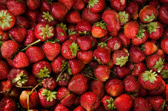 Υπόβαθρο της φράουλας Στοκ Εικόνες