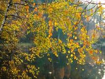 Υπόβαθρο της φύσης, όμορφα φύλλα φθινοπώρου στη δασική λίμνη Στοκ εικόνα με δικαίωμα ελεύθερης χρήσης