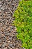 Υπόβαθρο της χλόης και της πέτρας Στοκ Φωτογραφία