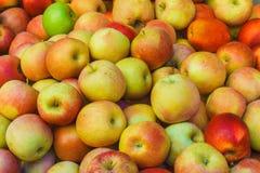 Υπόβαθρο της Apple, ώριμα εύγευστα φυσικά κόκκινα κίτρινα μήλα Στοκ φωτογραφία με δικαίωμα ελεύθερης χρήσης