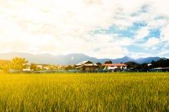 Υπόβαθρο τομέων ρυζιού στοκ εικόνες