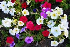 Υπόβαθρο τοπίων με τα χρωματισμένα κρεβάτια λουλουδιών στοκ εικόνες με δικαίωμα ελεύθερης χρήσης