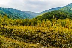Υπόβαθρο τοπίων φύσης φθινοπώρου Στοκ Εικόνες