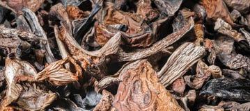Υπόβαθρο του ξηρού μανιταριού Στοκ Εικόνες