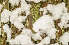 Υπόβαθρο του φλοιού δέντρων με το χιόνι Στοκ εικόνες με δικαίωμα ελεύθερης χρήσης
