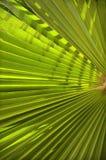 Υπόβαθρο του φύλλου φοινικών Στοκ Εικόνες