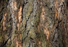 Υπόβαθρο του φλοιού δέντρων Στοκ φωτογραφίες με δικαίωμα ελεύθερης χρήσης
