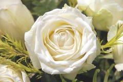 Υπόβαθρο τριαντάφυλλων Στοκ φωτογραφία με δικαίωμα ελεύθερης χρήσης