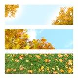 Υπόβαθρο τριών φωτογραφιών για τα εμβλήματα φθινοπώρου Δέντρα φθινοπώρου, φύλλα Στοκ φωτογραφία με δικαίωμα ελεύθερης χρήσης