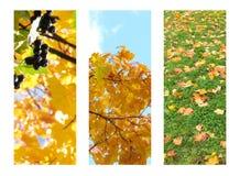 Υπόβαθρο τριών φωτογραφιών για τα εμβλήματα φθινοπώρου Δέντρα φθινοπώρου, φύλλα Στοκ Εικόνες