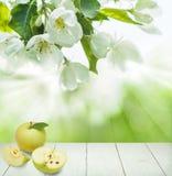 Υπόβαθρο τροφίμων με τα φρούτα της Apple, λουλούδια ανοίξεων Στοκ φωτογραφίες με δικαίωμα ελεύθερης χρήσης