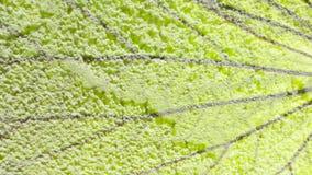 Υπόβαθρο τσιμέντου χρώματος Στοκ Φωτογραφία
