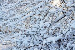 Υπόβαθρο των δέντρων για μια διπλή έκθεση, πολλοί κλάδοι, κλάδοι στο χιόνι, χιόνι στους κλάδους, χιόνι στα δέντρα Στοκ Εικόνες