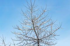 Υπόβαθρο των δέντρων για μια διπλή έκθεση, πολλοί κλάδοι, κλάδοι στο χιόνι, χιόνι στους κλάδους, χιόνι στα δέντρα Στοκ φωτογραφίες με δικαίωμα ελεύθερης χρήσης