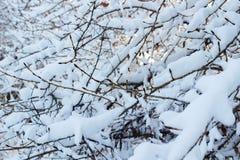 Υπόβαθρο των δέντρων για μια διπλή έκθεση, πολλοί κλάδοι, κλάδοι στο χιόνι, χιόνι στους κλάδους, χιόνι στα δέντρα Στοκ φωτογραφία με δικαίωμα ελεύθερης χρήσης