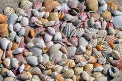 Υπόβαθρο των θαλασσινών κοχυλιών στην άμμο Στοκ Φωτογραφίες